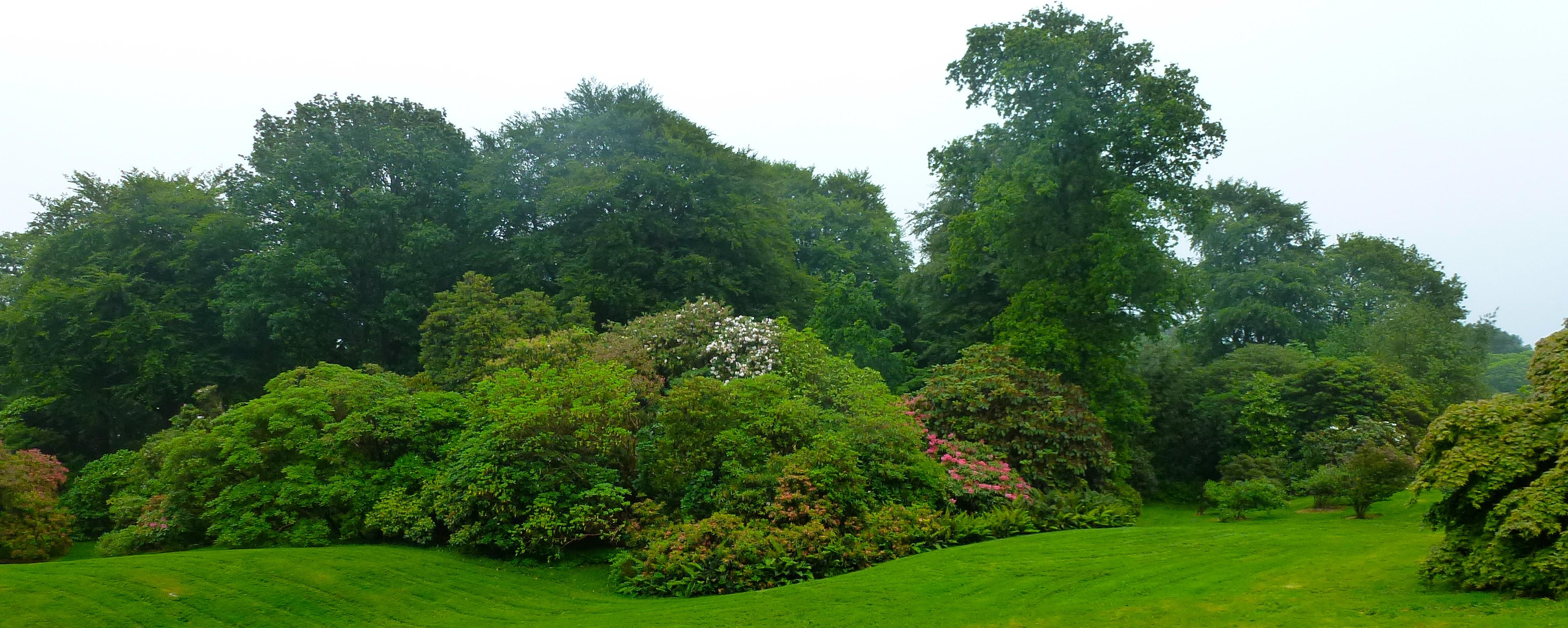 Northern ireland rowallane gardens i see you see for Garden deciduous trees