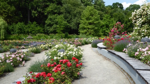 Part of the Rose Gardens.