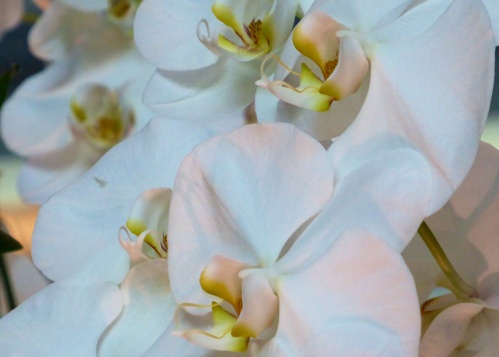 Orchid beauty.