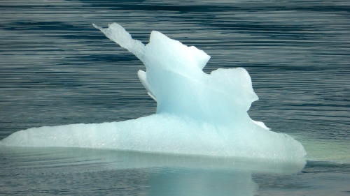 Ice chunk in Frederick Sound ©  DY  of  jtdytravels; P1100284