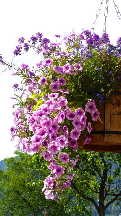 Baskets of flowers line most street. ©  JT  of  jtdytravels; P1130414