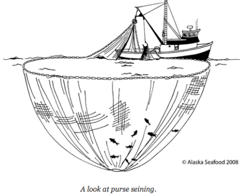 Diagram of Purse Seine Fishing